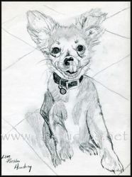 Puppy Pet Portrait Commission