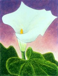 Cloak of Simplicity - Calla Lily, Oil Pastel, 11x14, Original Sold