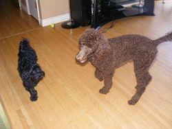 Sampson and Juno