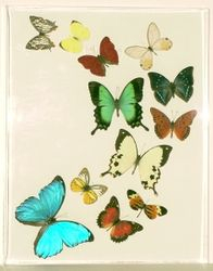 Medium sized lucite frame with butterflies in a reverse c flight