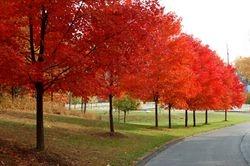 Wheaton Regional Park 2