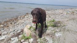 Kassey at the Lake