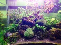 Ricardo's amazing planted tank