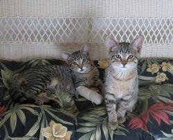 PRECIOUS & SASSY -- Adopted!