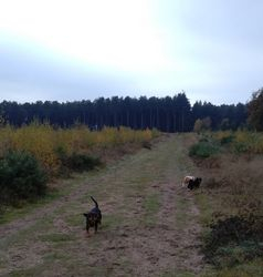 Running with Marley and Mitch at the forest