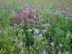 Apiary wild flower field 2011