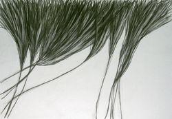 Drawing 9 Eleanor MacFarlane