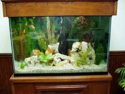65 gallon Freshwater