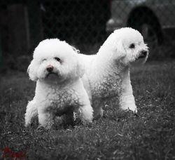 Sparky & Wiley