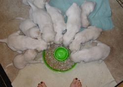 4 weeks old and FIRST MEAL!!