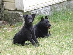 Selma ja Morris 2.7.2009