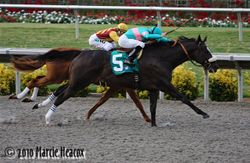 Zenyatta wins the Clement L. Hirsch
