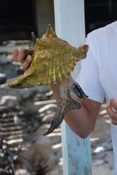 Sally the conch