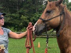Horse brushes don't eat horses