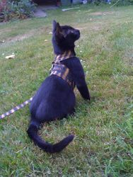 Juno Shows Off Her Jacket and Leash!
