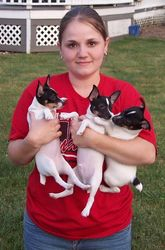 Mandy with Chanel/Rocky puppies