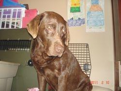 Koko, Grandma to be, February 2011