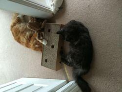 Garfield and Jojo