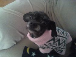 Daisy AKA Millie