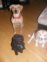 Caidence, Sampson and Sami