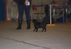 Esmeralda in the Showring - 13.02.2010
