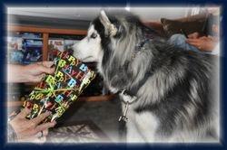 Zorro checking out Present 4