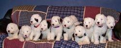 Sweet, beautiful puppies