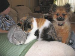 LOL Ya, that's a rabbit, Rosana the cat and Dixie as a baby