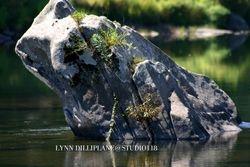 Grey Rocks 4