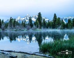 Morning Mist #1