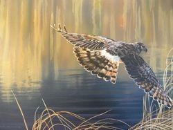 Herrier Hawk