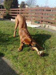 Give the dog a bone