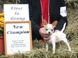 Cricket at his first show