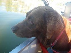 Koko LOVES to take boat rides