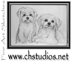 Maltese Pet Portrait Commission by CHStudios