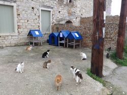Feeding stations in Loggos