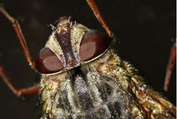 Fly detail 1