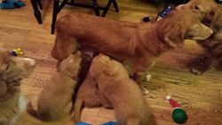At 7 weeks, not much room left at the milk bar.