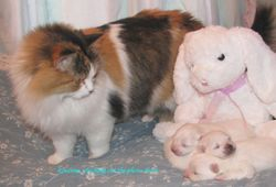 Rosanna checking out the eskie puppies