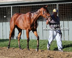 Beholder Cools Out