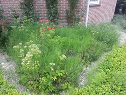 tuinonderhoud - voor