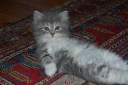 Anastasia, 7 uker.... titt tei