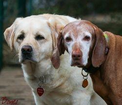 Daisy & Langham