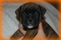 Brodie 4 weeks