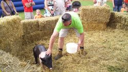 Greased Pig Contest