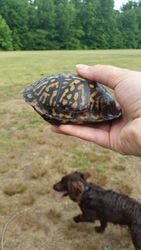 Turtle and Possom 06/04/2015
