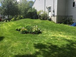 After hillside project, grass filled in great