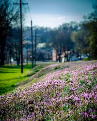 Wildflower Landing