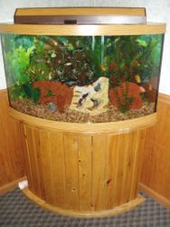 54 gallon Corner Bow-front Freshwater