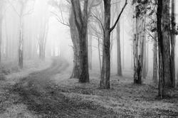 Forest n Fog
